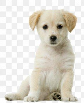 Puppy - Labrador Retriever Siberian Husky Pug Puppy Cat PNG