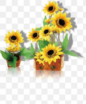 Sunflower, Taobao Creative, Yellow, Flower, Flowers, Trailers - Common Sunflower Computer File PNG