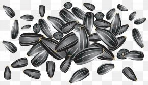 Sunflower Seeds Clipart Picture - Sunflower Seed Common Sunflower Clip Art PNG