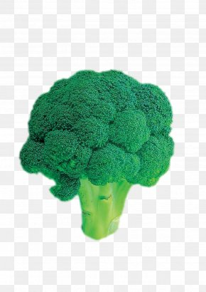 Broccoli - Broccoli Vegetable PNG