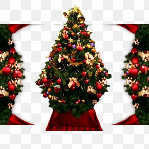 Christmas Tree - Christmas Tree Christmas Ornament Christmas Decoration PNG