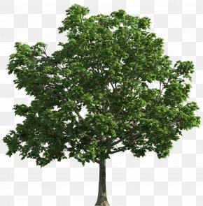 Spring Tree - Tree Clip Art PNG
