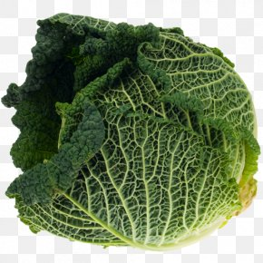 Cabbage - Red Cabbage Cauliflower Brussels Sprout Savoy Cabbage PNG