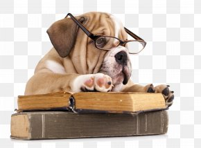 Dog - French Bulldog The Battle Of The Books Reading PNG
