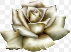 Beautiful White Rose Clipart - Rose White Clip Art PNG