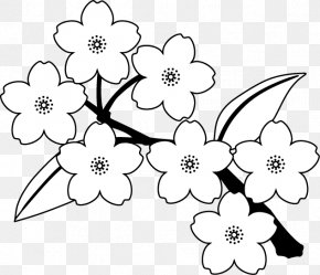 Cherry Blossom - Borders Clip Art Floral Design Illustration Cherry Blossom PNG