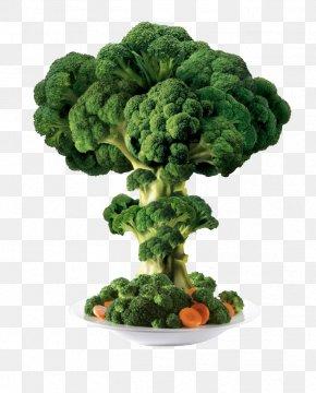 Creative Broccoli - Broccoli Vegetable PNG
