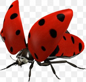 Ladybug - Ladybird Insect Clip Art PNG