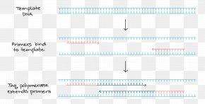 Effect Chart Of Dental Restoration - Polymerase Chain Reaction Primer DNA Polymerase DNA Sequencing PNG