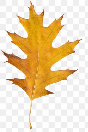 Autumn Leaves - Autumn Leaves Clip Art PNG