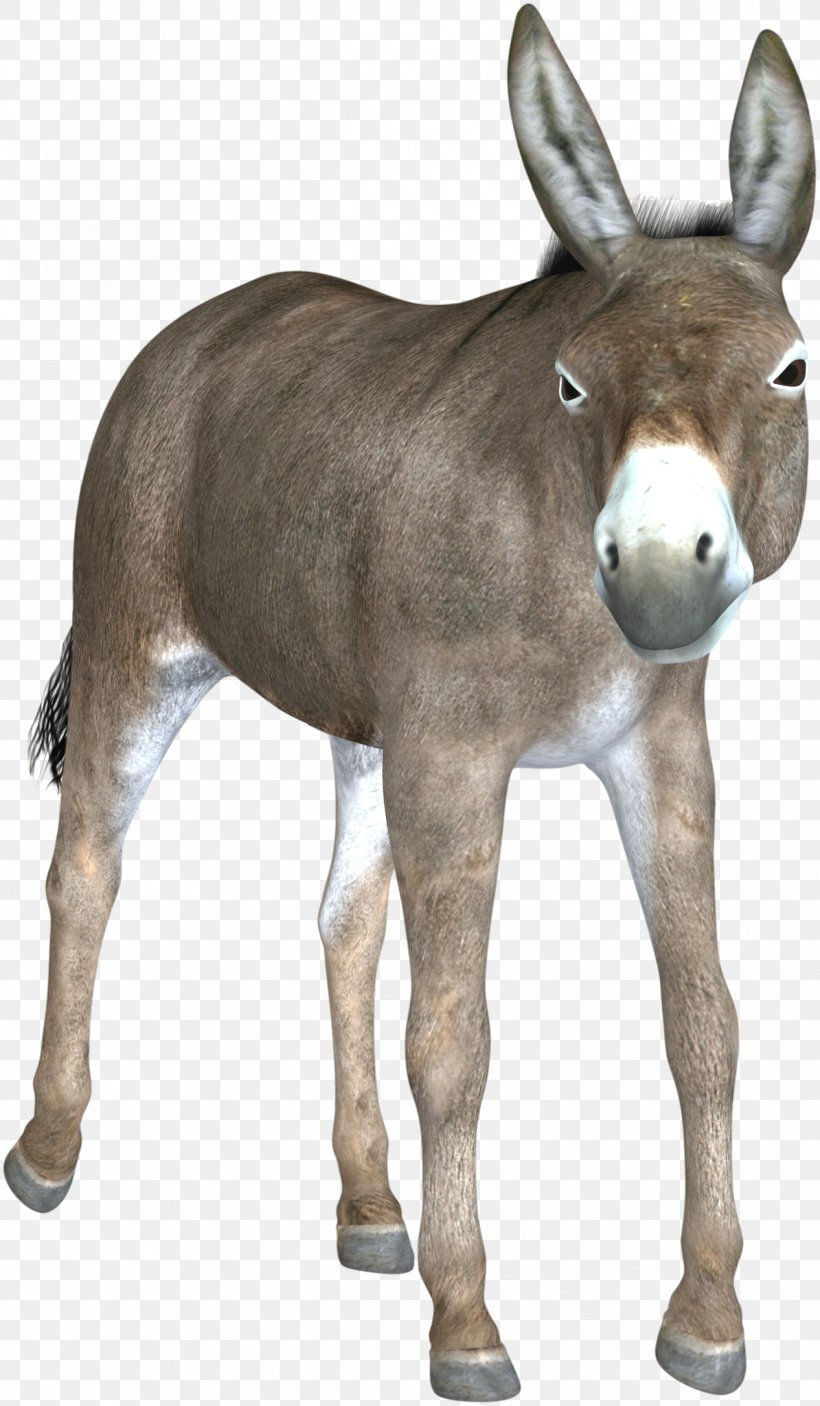 Mule Hinny Foal Mare Horse, PNG, 1266x2171px, Mule, Colt, Donkey, Fauna, Foal Download Free