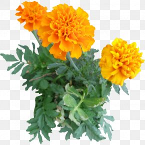 Flower Tree - Mexican Marigold Plant Flower Clip Art PNG