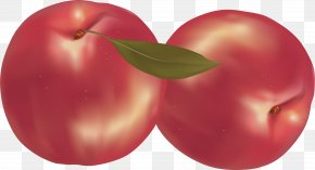 Peach Image - Raster Graphics Comparison Of Vector Graphics Editors PNG