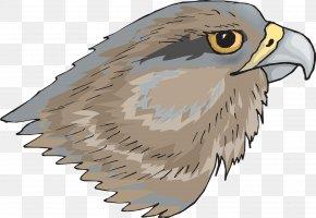 Sharp Hawkeye - Hawk Clip Art PNG