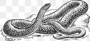 Hand-painted Snake Simulation - Snake Reptile Drawing Black And White Clip Art PNG