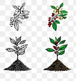 Cartoon Coffee Tree Seconds Picture Material - Arabica Coffee Cafe Illustration PNG