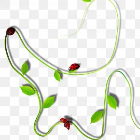 Plant - Plant Vine Clip Art PNG