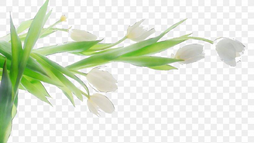 Tulip Desktop Wallpaper White Flower Png 2880x1624px 4k Resolution 1610 Aspect Ratio Tulip Aquarium Decor Aquatic