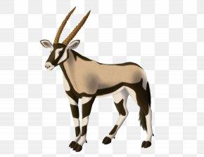 Gazelle - Gemsbok Antelope Gazelle Horn Even-toed Ungulates PNG