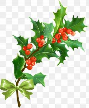 Creative Christmas - Christmas Holly Leaf PNG