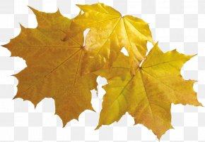 Leaf - Maple Leaf Autumn Leaves Clip Art PNG