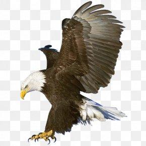 Eagle - Bald Eagle Macintosh Wallpaper PNG