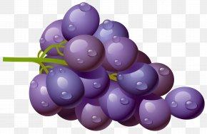 Grape Clipart Picture - Common Grape Vine Wine Must PNG