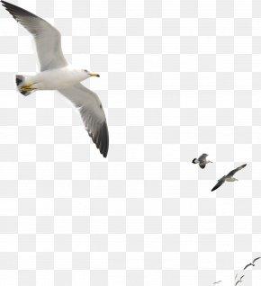 Seagull - Gulls Bird Duck Goose Octopus PNG