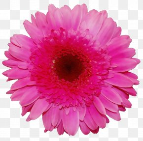 Daisy Family Artificial Flower - Artificial Flower PNG
