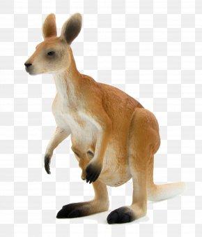 Kangaroo - Red Kangaroo Macropodidae Eastern Grey Kangaroo Western Grey Kangaroo Antilopine Kangaroo PNG