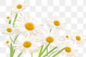 Nail - Common Daisy Nail Flower Finger Antifungal PNG