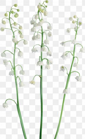 Lily Of The Valley - Lily Of The Valley Raster Graphics Clip Art PNG