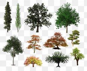 Tree Plan - Tree Shrub Desktop Wallpaper Clip Art PNG