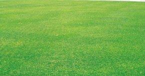Grass - Crop Lawn Grassland Field Fodder PNG