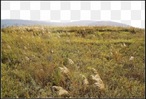 Wild Grass Reed Field Poster Decoration - Resource PNG