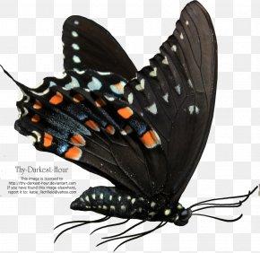Buterfly - Butterfly Net Clip Art PNG