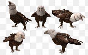 Creature - Spore Creature Creator Spore Creatures Bald Eagle Bird PNG