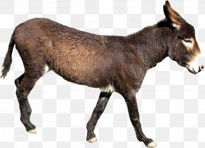 Donkey - Donkey Milk Mule Horse Clip Art PNG