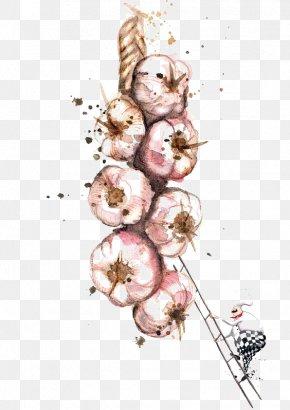 Garlic - Watercolor Painting Drawing Art Illustration PNG