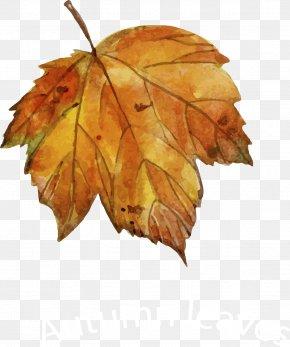 Leaf - Leaf Autumn Drawing Euclidean Vector PNG