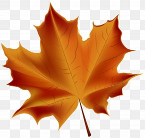 Beautiful Red Autumn Leaf Transparent Clip Art Image - Autumn Leaf Color PNG