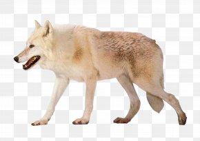 White Wolf - Czechoslovakian Wolfdog Arctic Wolf Alaskan Tundra Wolf Image Resolution PNG