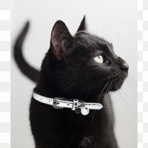 Aesthetic Black Cat - Black Cat Bombay Cat Domestic Short-haired Cat Collar Whiskers PNG
