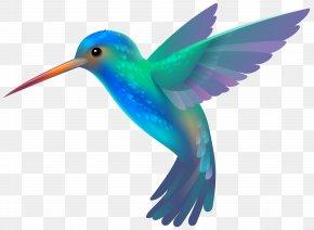 Hummingbird Transparent Clip Art Image - Hummingbird Clip Art PNG