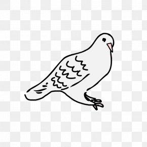 Dove Line Art - Columbidae Drawing Clip Art PNG