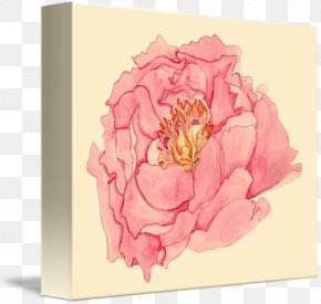 Subshrubby Peony Flower - Peony Flower Garden Roses Floral Design Tulips In A Vase PNG