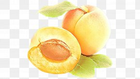Apricot Kernel Plant - Watermelon Background PNG