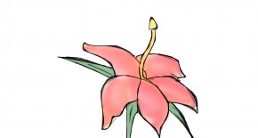 Tropical Flower Drawings - Flower Drawing Clip Art PNG