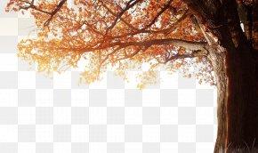 Winter Fall Tree Autumn - 4K Resolution 1080p Autumn Wallpaper PNG