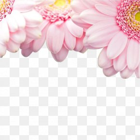 Pink Gerbera - Light Pink Flowers Rose Wallpaper PNG